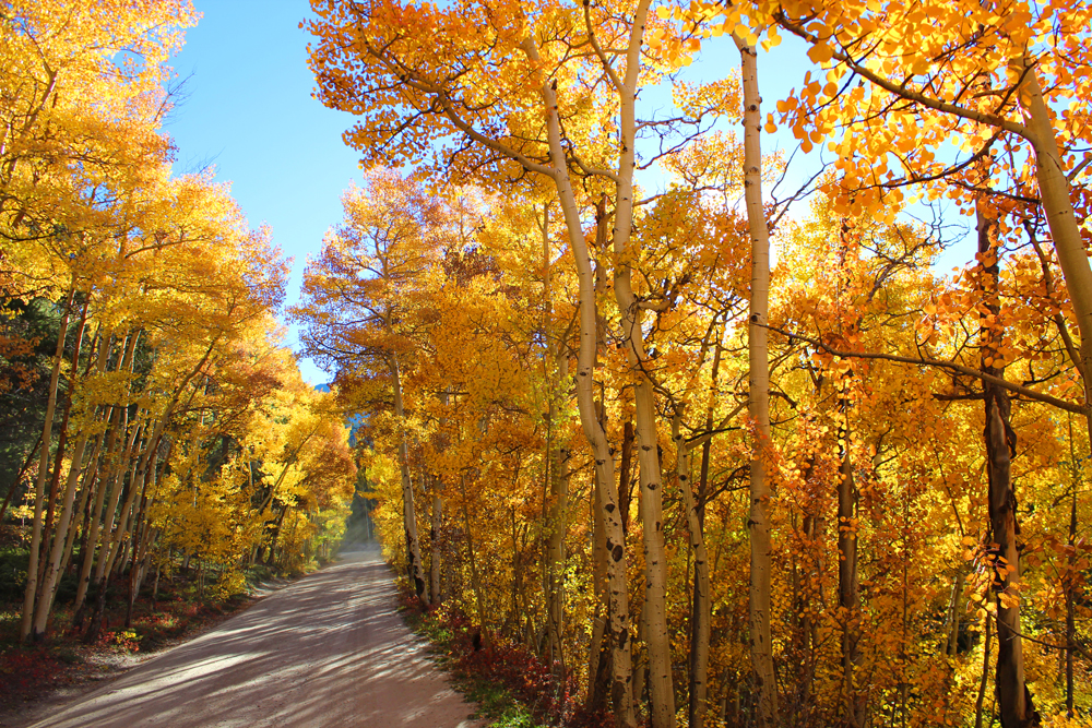 fall in mountains and dirt road colorado